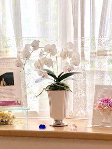 💞胡蝶蘭のオーダー注文